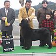 2012.2.26 熊本武蔵愛犬クラブ展