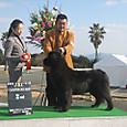 2012・2・11 熊本ドッグファンシャーズクラブ展