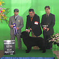 2012.12.8 飯塚愛犬クラブ展