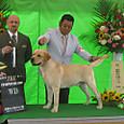 2012.6.1 倉敷全犬種クラブ展